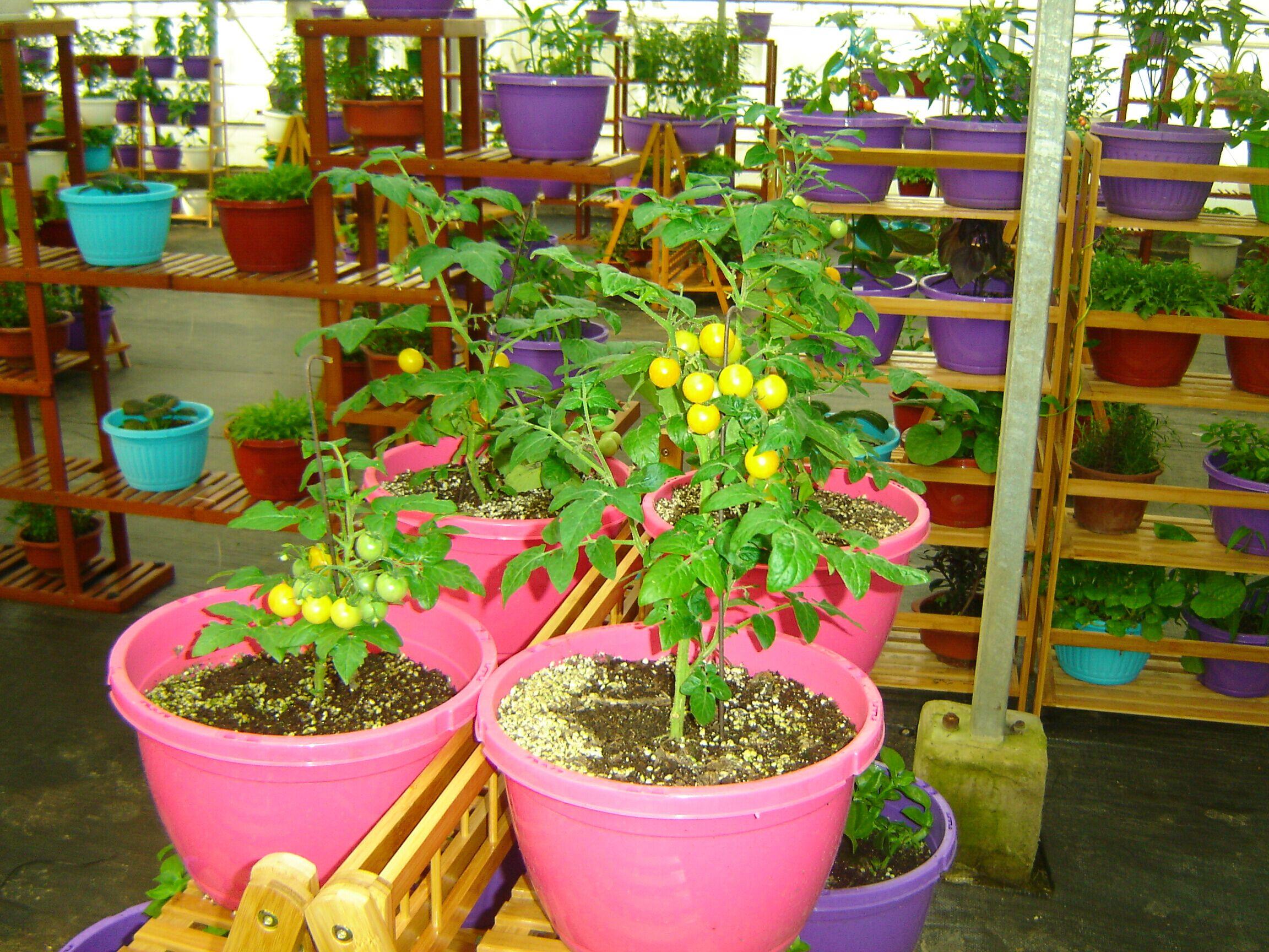 壁纸 花 盆景 盆栽 植物 桌面 2304_1728