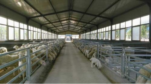 羊场整体设计图